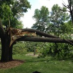 Weekend Storm Causes Damage to Downtown Park  [PHOTOS]