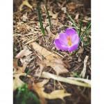 Photography Spotlight [March 25, 2015]